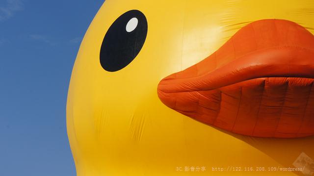 SONY DSC 2013桃園地景藝術節~黃色小鴨 2013桃園地景藝術節~黃色小鴨 DSC03554